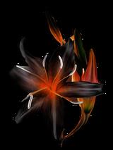 http://warlock.3dn.ru/MisteriumArch/Library/Components/Herbs/cvetok_beliara.png