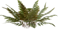 http://warlock.3dn.ru/MisteriumArch/Library/Components/Herbs/paporotnik_tehra.png