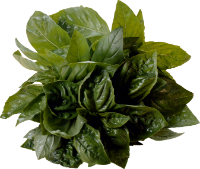 http://warlock.3dn.ru/MisteriumArch/Library/Components/Herbs/rvotnyj_koren.png