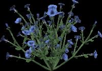http://warlock.3dn.ru/MisteriumArch/Library/Components/Herbs/zhivokost.png