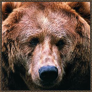 http://warlock.3dn.ru/MisteriumArch/Library/Mob/Animals/buryj_medved.jpg