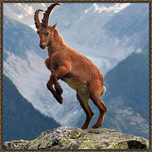 http://warlock.3dn.ru/MisteriumArch/Library/Mob/Animals/gornyj_kozjol.jpg