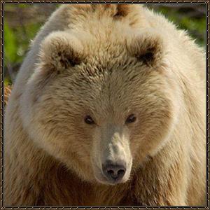 http://warlock.3dn.ru/MisteriumArch/Library/Mob/Animals/gornyj_medved.jpg