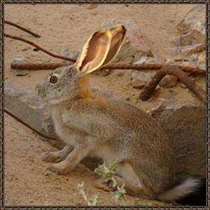 http://warlock.3dn.ru/MisteriumArch/Library/Mob/Animals/gornyj_zajac.jpg