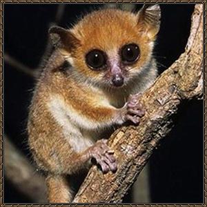 http://warlock.3dn.ru/MisteriumArch/Library/Mob/Animals/lemur.jpg