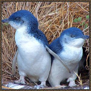 http://warlock.3dn.ru/MisteriumArch/Library/Mob/Animals/malyj_pingvin.jpg