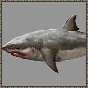 http://warlock.3dn.ru/MisteriumArch/Library/Mob/Animals/poljarnaja_akula.png