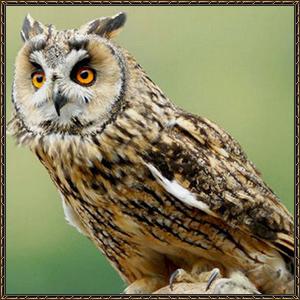 http://warlock.3dn.ru/MisteriumArch/Library/Mob/Animals/sova.jpg