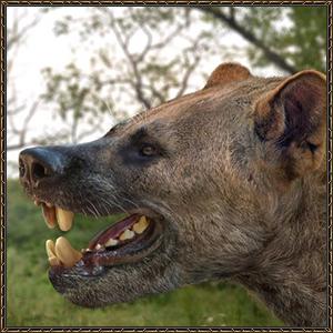 http://warlock.3dn.ru/MisteriumArch/Library/Mob/Animals/volkomedved.jpg