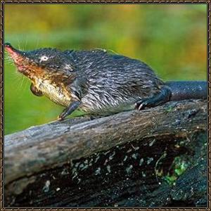 http://warlock.3dn.ru/MisteriumArch/Library/Mob/Animals/vykhukhol.jpg