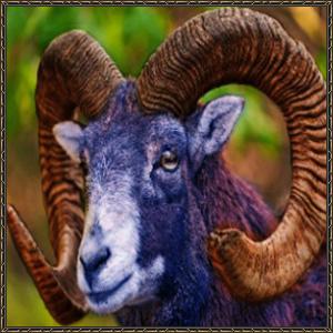 http://warlock.3dn.ru/MisteriumArch/Library/Mob/Animals/zaan.jpg
