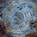 http://warlock.3dn.ru/MisteriumArch/Library/Resources/Stones/okameneloe_derevo_2.jpg